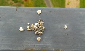 Alignement de petits cailloux - © Photos LH